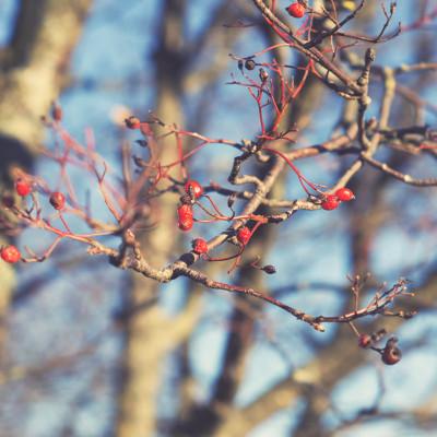 Jak stworzyć ogród atrakcyjny zimą