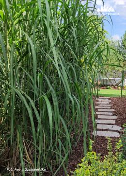 Ogród przydomowy - modernizacja
