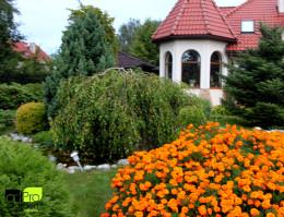Ogród - Brzoskwinia