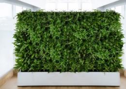 Mobilne Zielone Ściany Event Flowers