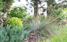 Ogród na dwóch tarasach z sosnowym zagajnikiem
