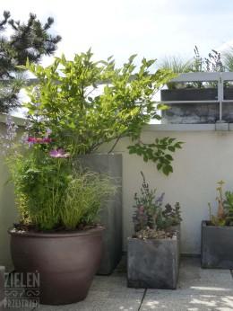 Ogród w donicach